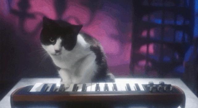 Kattenspam blijft een hit